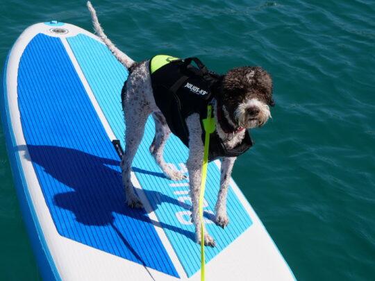 Bode der Seglerhund